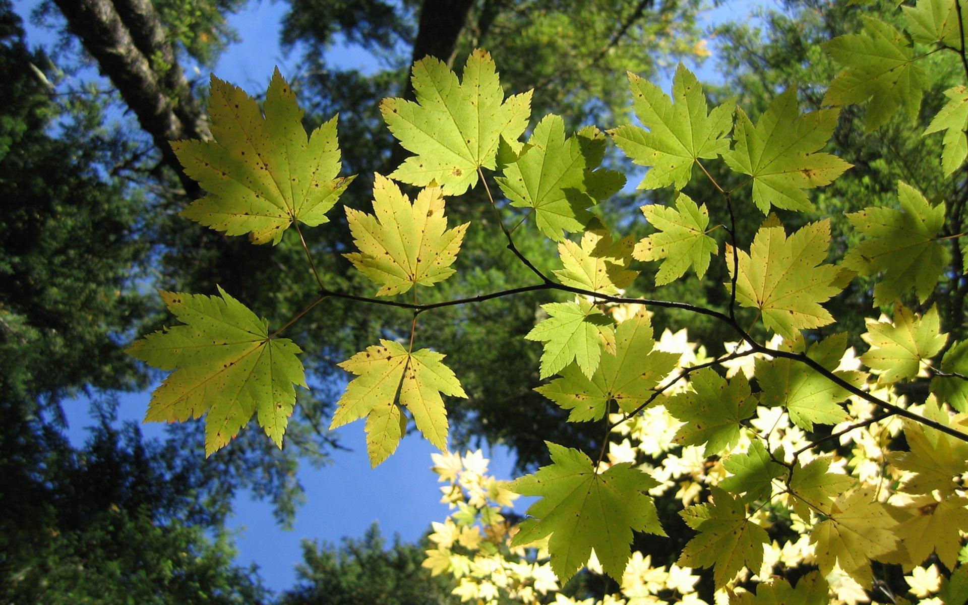 رویای برگهای سبز و نور های ملایم --- برگهای درختان بلند